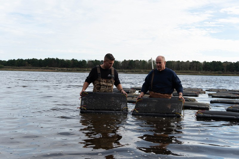 Delaware Sea Grant Marine Advisory Service agent Ed Hale (left) joins Mark Casey of Delaware Cultured Seafood in examining Casey's juvenile oysters in Indian River Bay.