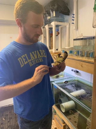 UD graduate Alex Douwes has worked as an intern at the Mote Marine Laboratory and Aquarium in Sarasota, Florida. He has worked in the lab that studies crabs, but he will shift to coral.