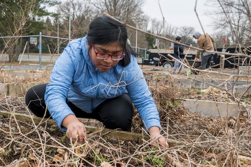 UD students volunteer in honor of MLK | UDaily