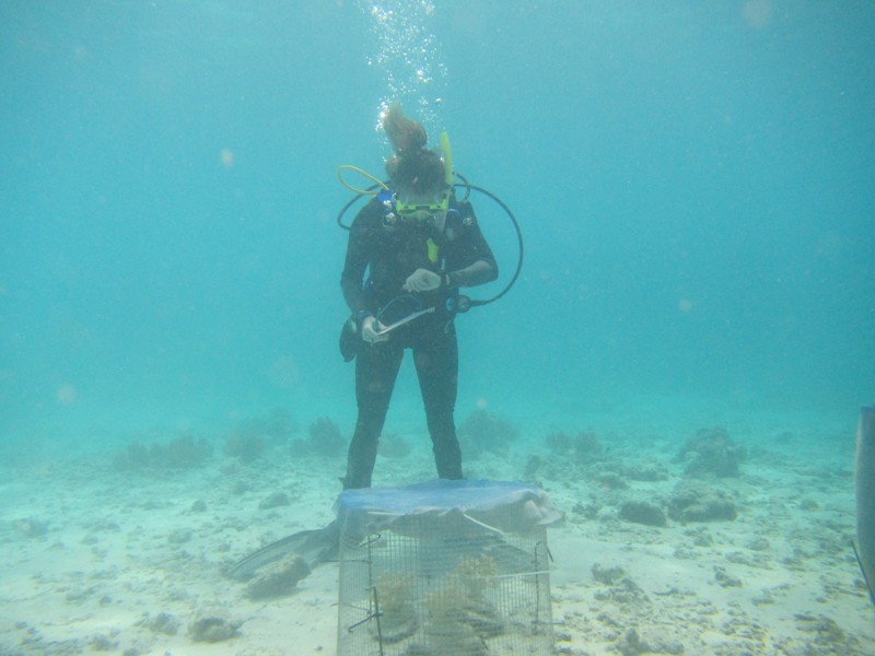 During field studies in the tropical waters off the island of Fiji, Emily Ruhl, then a UD graduate student, studied the habitat preferences of humbug damselfish by placing the fish in enclosures containing 3D-printed coral with various levels of complexity and monitoring their behavior.