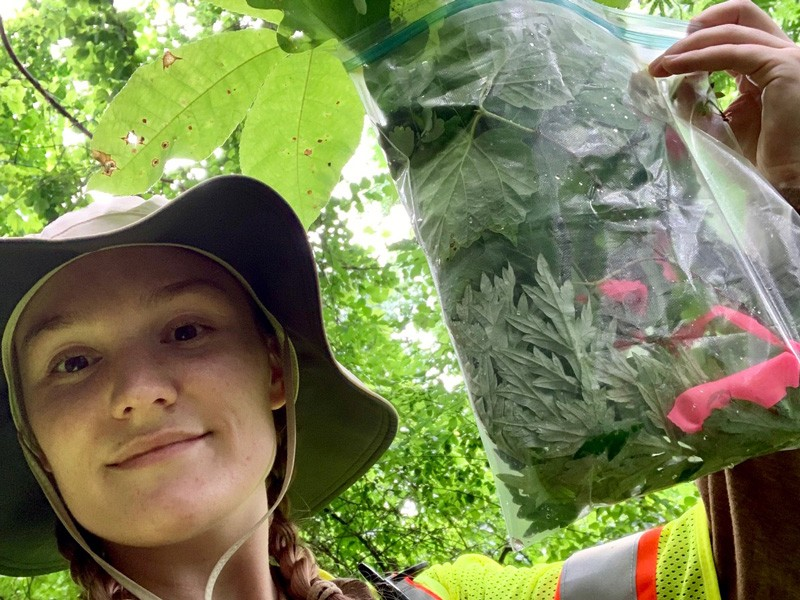 As part of her internship, UD student Jordan Dobak had to collect and press 75 different plant species and then use that collection to learn the plants by sight while also learning the common name and the scientific name.