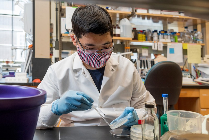 Andy Lam is a graduate student working in the lab of Jessica Tanis, an assistant professor of biological sciences.