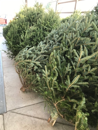 If you have Christmas-tree related questions, UD's Cooperative Extension offers Master Gardener Helplines, with expert volunteers standing by to answer your every horticulture query.