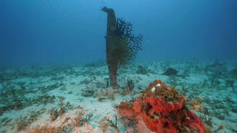 A coral covered propeller of a U.S. SBD-5 Dauntless dive bomber stands above the sea floor  in Truk Lagoon.