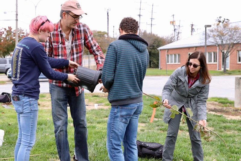 From left to right: Graduate student Danielle Mikolajewski, U.S. Forest Service research entomologist Vince D'Amico, undergraduate student Christian Riggin and Tara Trammell, John Bartram Assistant Professor of Urban Forestry, preparing an elm tree for planting.