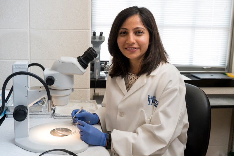 Shaili Patel examines material under a microscope in Salil Lachke's lab during the summer of 2019. She graduated in 2014 with a degree in biological sciences and, after her undergraduate research experience inspired her to attend graduate school, she is now back at UD as a doctoral student.