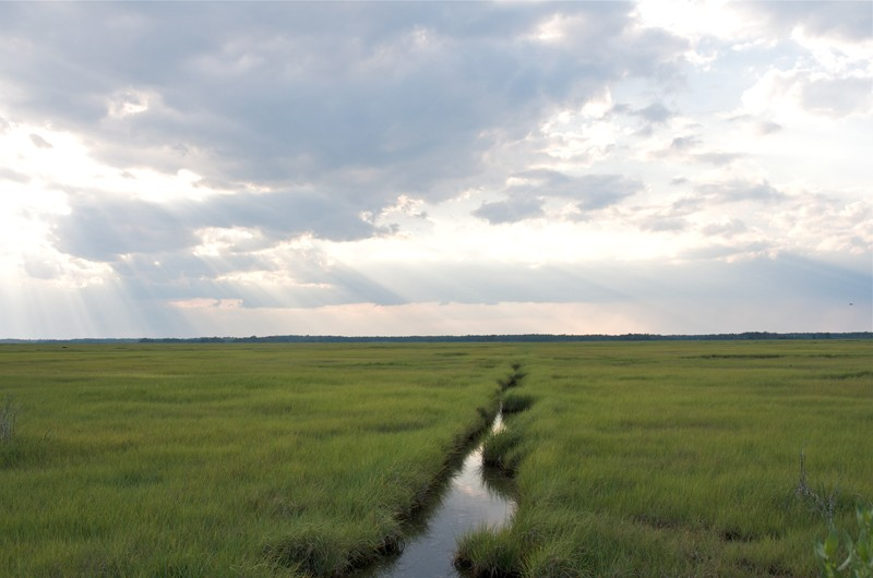 Critical coastal zones, like the marsh shown here, play an important role in balancing the ecosystems that connect land and sea. UD's Holly Michael is leading a multi-institutional NSF-funded project to understand how these systems are changing due to saltwater intrusion.