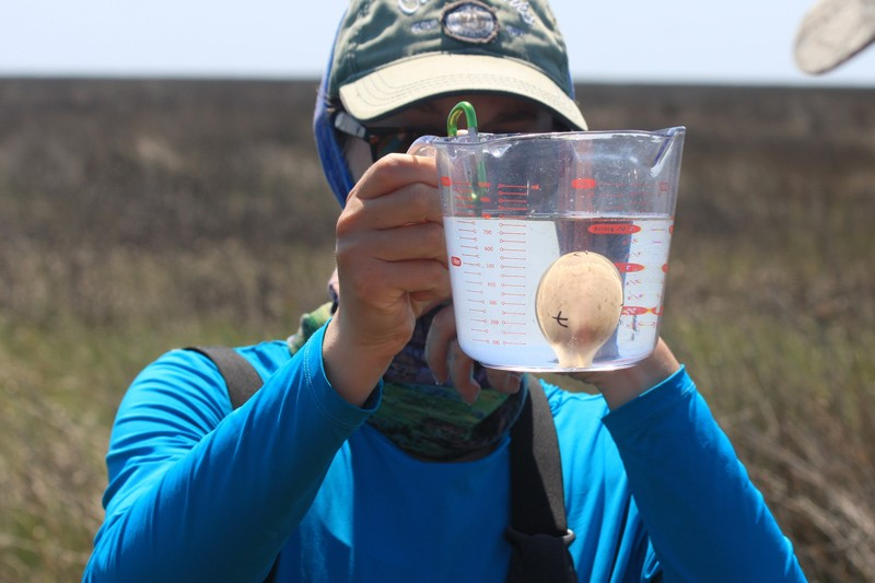 Wildlife ecology graduate student Amanda Hoyt floats an egg to estimate the animal's hatch date. Floating involves placing an egg into a cup of fresh water. Where the egg sits in the water column determines how far along the embryo is in development.
