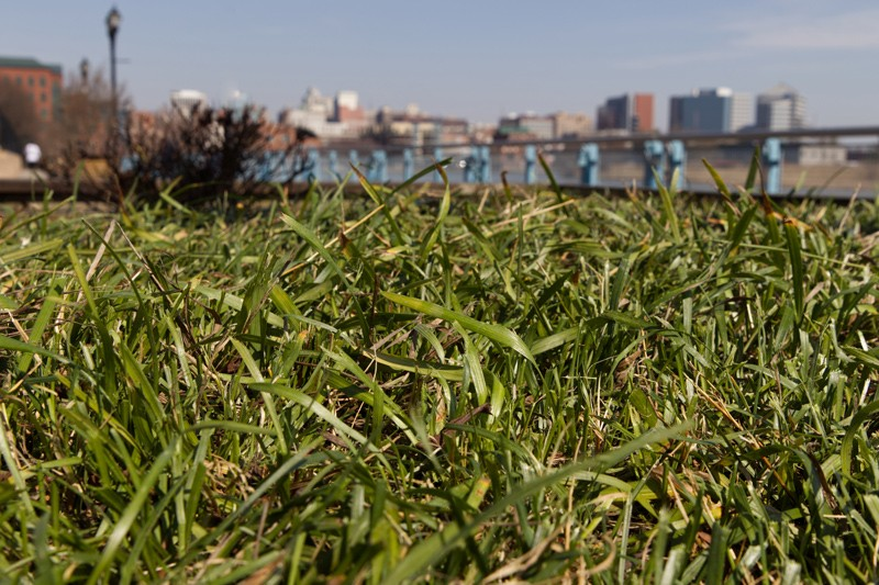 Researchers have quantified carbon emissions from lawns in cities, providing important guidance for future urban design and greenery maintenance.